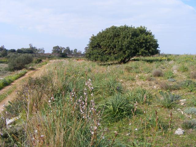 Kefalonia land for sale