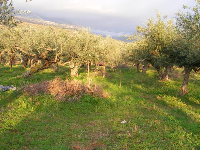 Agios Nikolaos building land in Mani