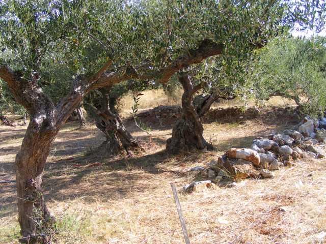 Peloponnese Mani building land