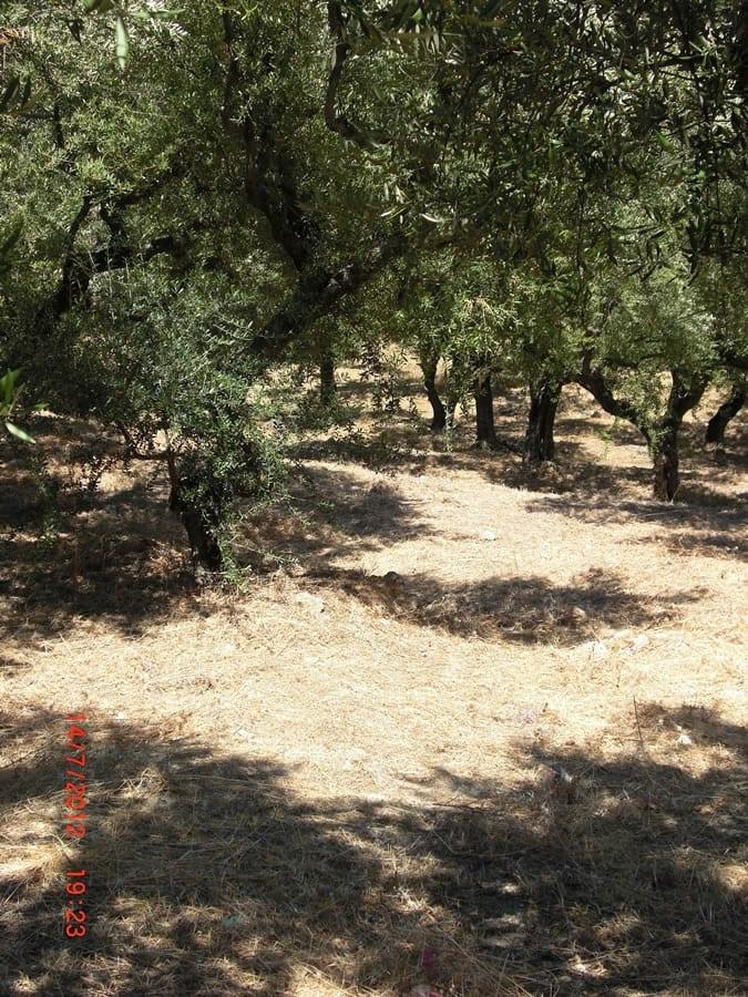 Zakynthos land near Alykes